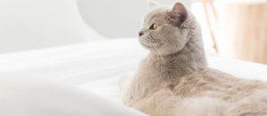 tapiterie rezistenta pisici