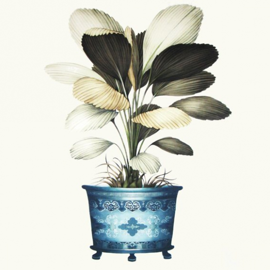 Perdele cu flori supradimensionate Licuala Turquesa